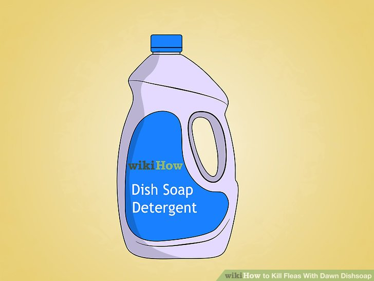 Dawn dish soap for fleas on dogs
