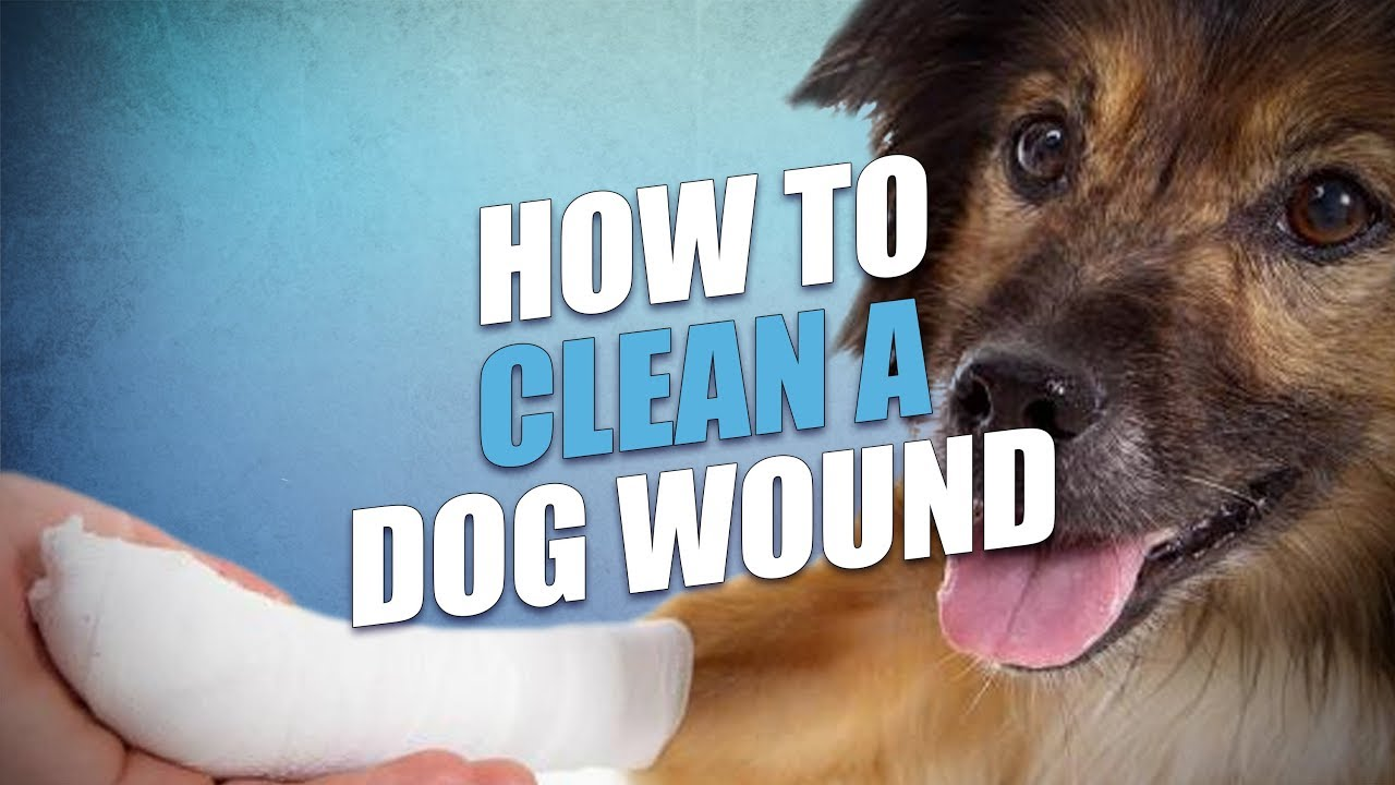 What to put on a dogs open wound