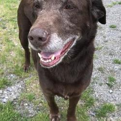Snohomish county craigslist pets. Snohomish county ...
